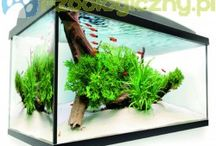 Akwaria / Zbiorniki wodne - akwaria - a w środku ławice pełne kolorowych ryb... Uspokajają i pięknie wyglądają - jeśli o nie dbasz