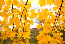 ~ Inspire....Yellows... ~
