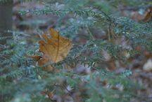 Nature / by Karen Man