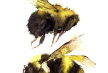 Humble Bees in Watercolour