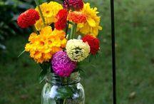 kwiaty i ogrod