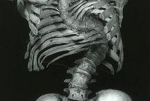 Anatomy ;)
