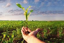 GlobalCrop Protection Chemicals Market