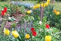 Zahrada / vše okolo květin, zahradničení, zeleniny