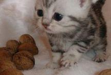 Baby cat!