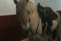 Vores heste
