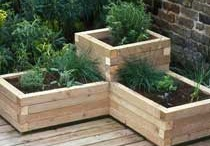 Going Green - Vegetables