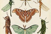 Beau_Beetles