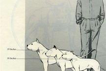 Dog amstaff_♡ Daiki ♡