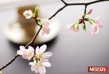 コーヒー香りと桜