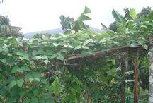 Pepper County Homestay - Thekkady/Kerala / Pepper County Homestay - Thekkady/Kerala