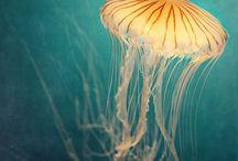 The Sea / The Sea by Mitsuru Nagata - nagatayakyoto.net