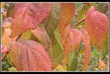 Pastelowa Jesień / moje zdjęcia