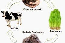 Cara Budidaya Organik / organikilo.co Cara Budidaya Pertanian dan Peternakan menggunakan Pola Organik http://www.organikilo.co