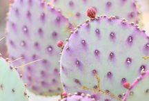 Kaktusz & pozsgás