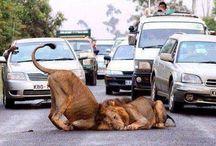South Africa..Cape Town..Garden Route..Johannesburg..Sun City & Animal Reserve