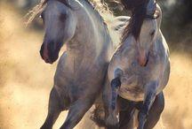 wild pony club