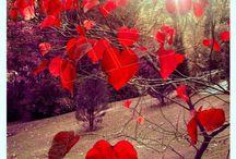 Nature  / by Dewayne Preece