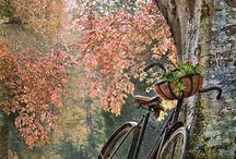 bicicletas♡