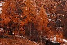 fall into autumn.