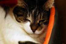 "My cat Mizio-Prince"" I hate photos!!!"""