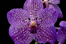 indor plants / Orchid