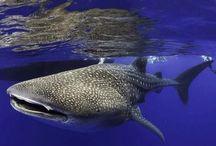 Scuba Diving Pics November 2014 / by PADI