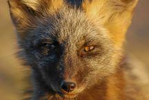 Wildlife / Wildlife around Grand Teton National Park and Jackson Hole Wyoming