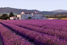 My Lavender Dreams / I would love to one day own a lavender farm. With a B&B and a shop to sell everything lavender and have fun making some lavender edible's . Those are my lavende dreams! / by Alexa McCabe