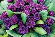 Perennials I Have - Care
