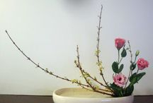 moribana / ... using long low containers