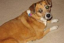 Pet Food Recalls / News about pet food recalls that are dangerous to our pets and to us as well. / by Ken Alston