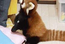 Katzenbär