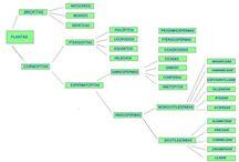 Reino Plantae / Clasificación de los seres vivos que componen el Reino Plantae