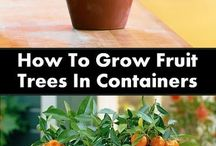Grow - containers - fruit tree