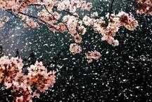 Gyönyörű képek