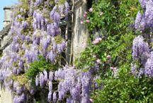 Garden Beauties / by MaryAnne Pusey