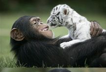 Animaux in love