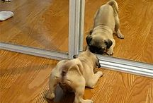 perritos bonitos