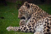 Zoo et jardin botanique de Budapest