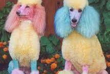 Fryzurki psie