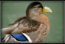 Nature & Animals - Flickr