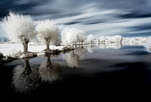 best of pinterest photographers / by Michelle Tsou