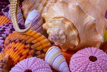 Underwater world / Freshwater fish, sealife, seashell, coral...