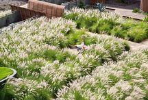 Garden - Grasses