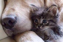 Pejsci a koťata