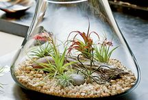 air plant display / by radiya sojitrawala