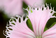 Florals we Love