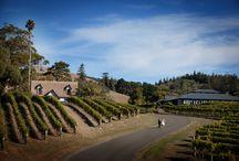 Weddings - Top New Zealand destination wedding venues