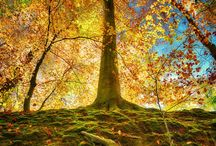 Awesome Trees / Trees that inspire or just look awesome.
